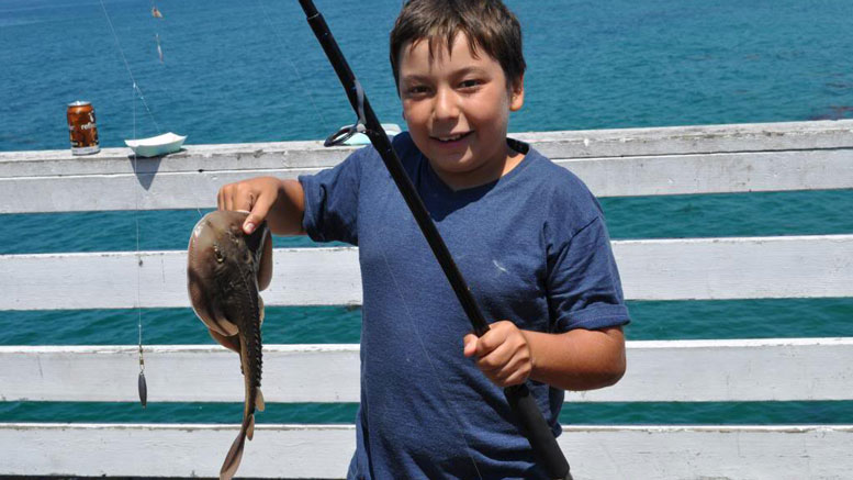 Crystal pier kids fishing derby for Crystal pier fishing