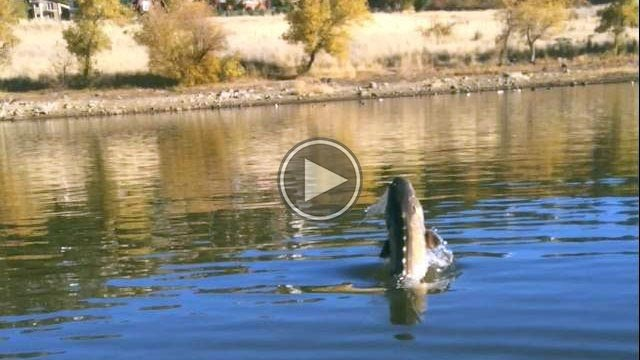 San diego 39 s sturgeon record a family affair includes video for Freshwater fishing san diego