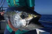 yellowfin-tuna-fly-fishing_1