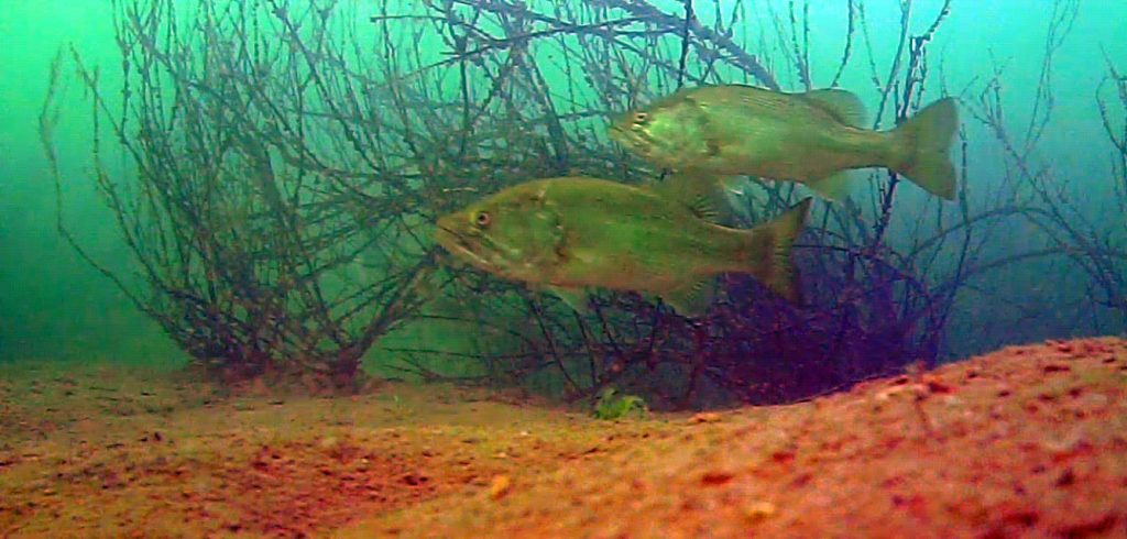 san-vicente-bass-underwater