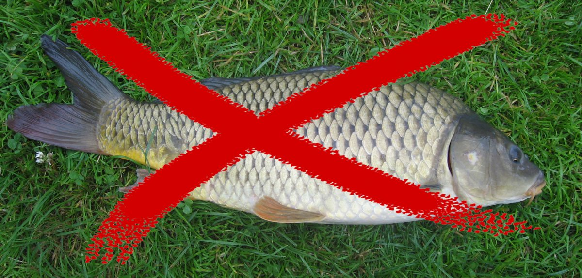 carp-not-wanted.jpg