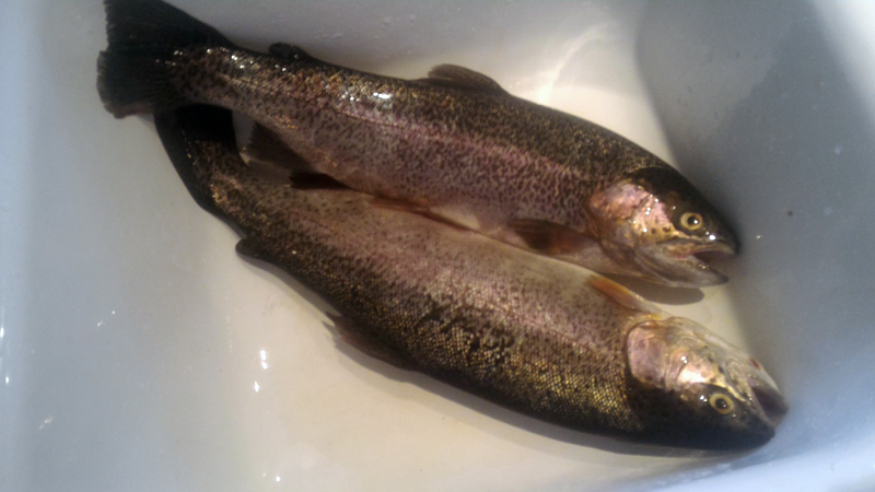 Wohlford lake report 12 10 5995lb of trout left san for Lake wohlford fishing report