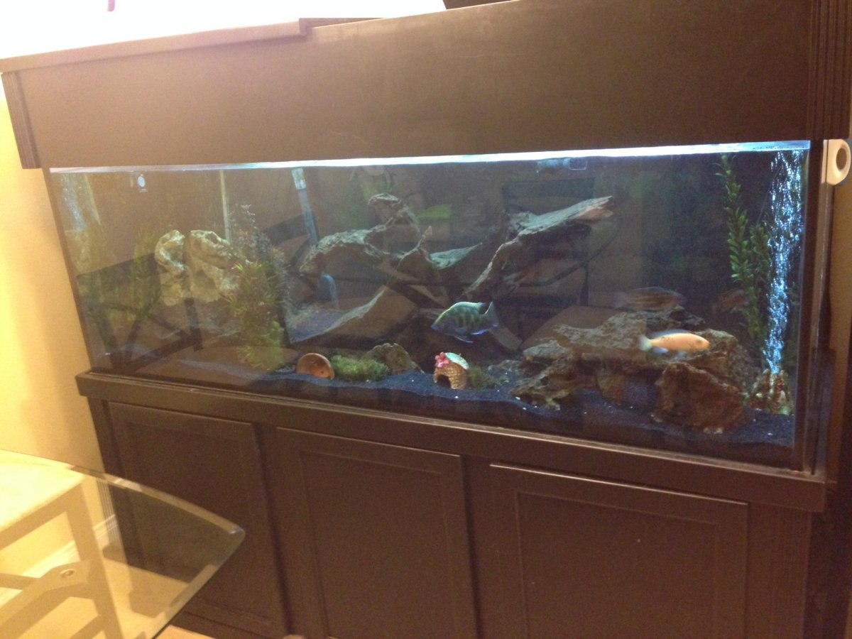 For Sale Trade 180 Gallon Aquarium With Stand And Canopy