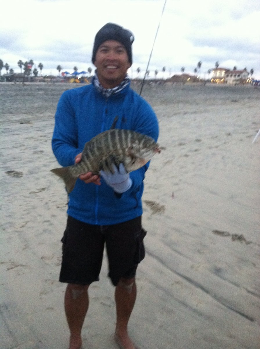 Perch in the surf san diego fishing forums for Surf fishing san diego