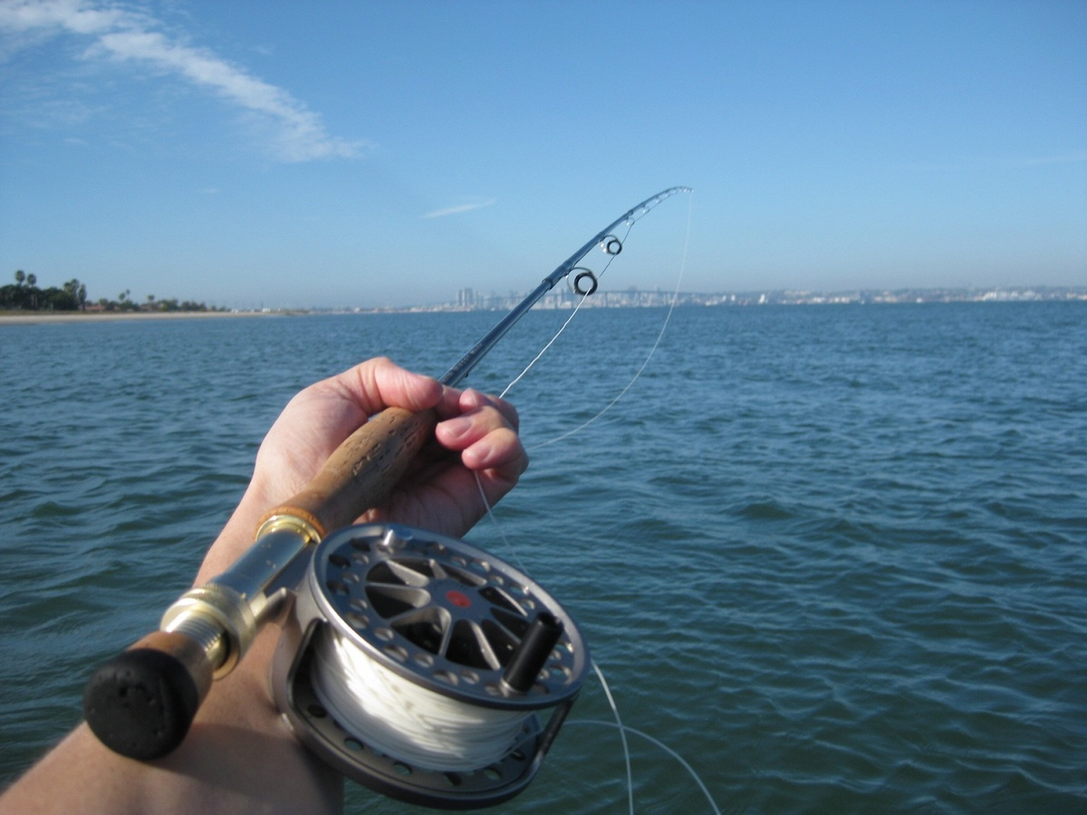 Float tubed coronado cays san diego fishing forums for Fly fishing san diego