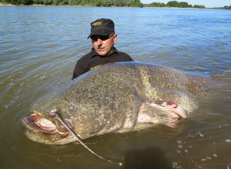records+largest+fly+fished+fish+ocean+sea++giant+freshwater+saltwater+fishing+images+lb+pound+22.jpg