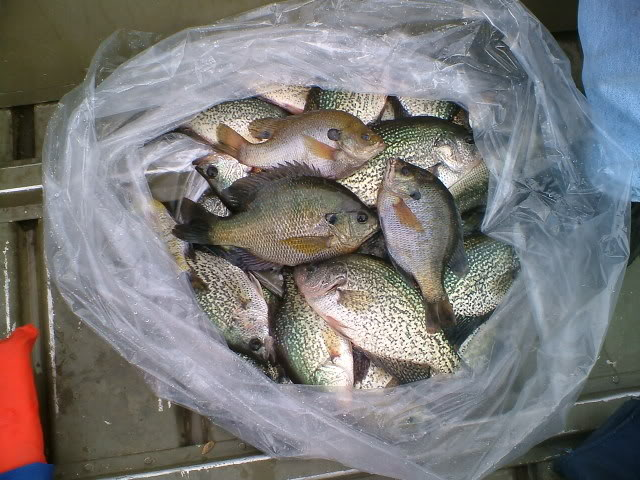 Taking my boys to lake hodges where to find the bluegill for Lake hodges fishing