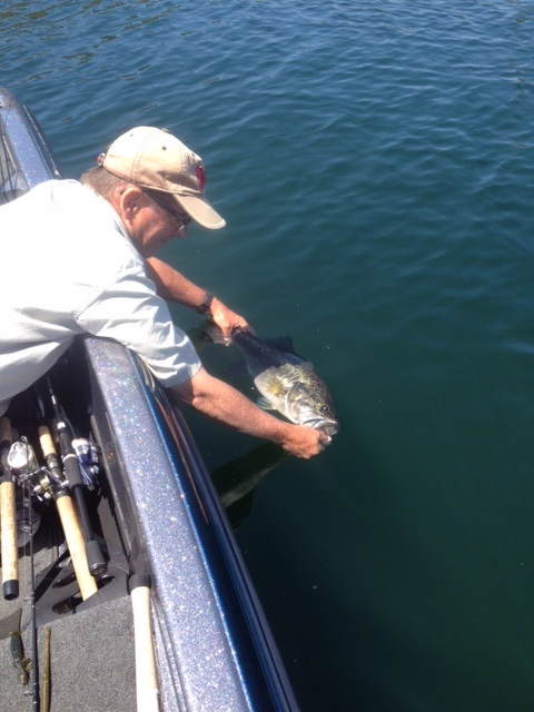 Does that fish count or not hmmm san diego fishing forums for Fish count san diego