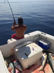 Flying Fish? | San Diego Fishing Forums