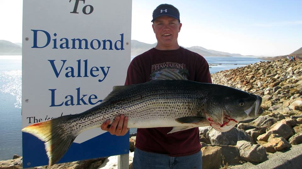 Trout still headlining action at diamond valley for Diamond valley lake fishing report