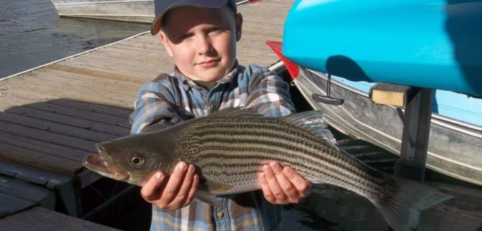 Stripers providing high action at lake skinner for Lake skinner fish report