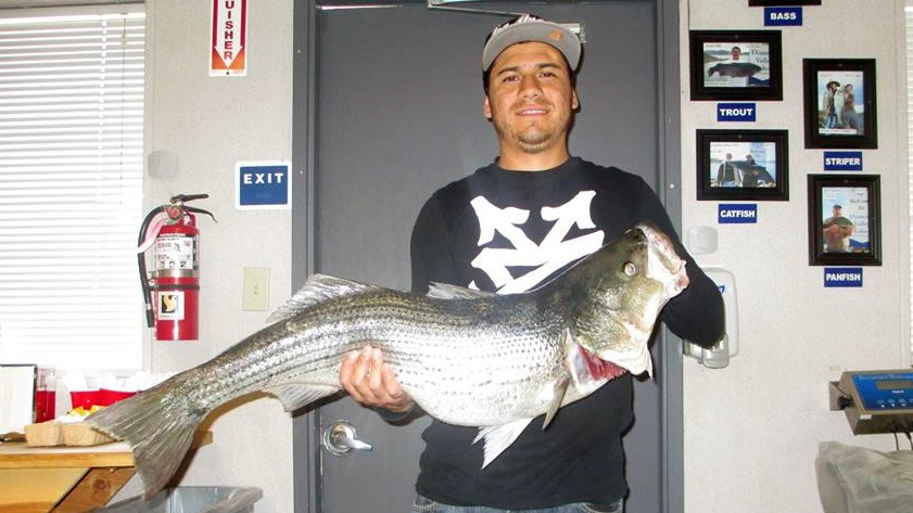 Dvl receives two trout plants today stripers take notice for Diamond valley lake fishing report