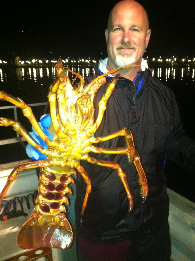 San diego bay lobster report from captain alan clowers for Lobster fishing san diego