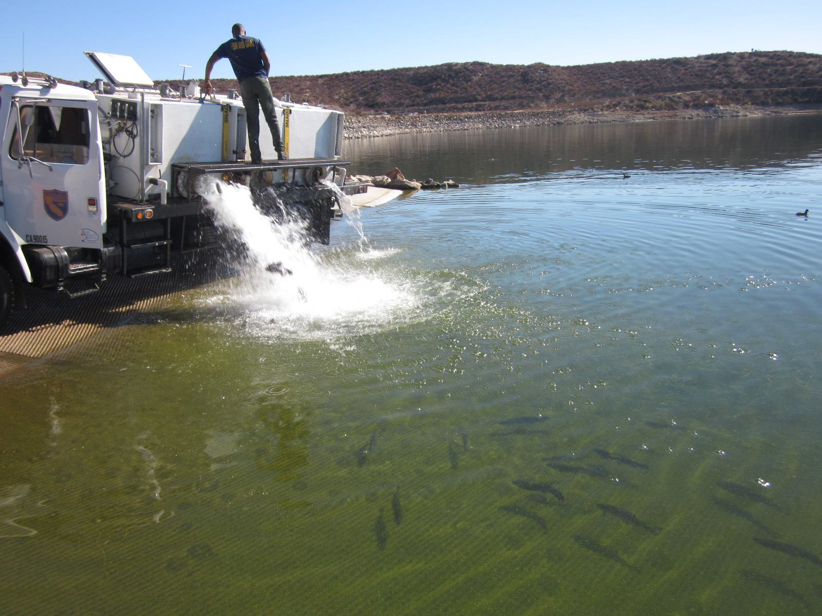 Scheduled freshwater fish plants in san diego for Stocked trout fishing