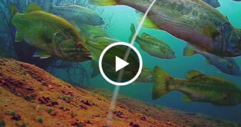Amazing underwater footage from San Vicente's opening week