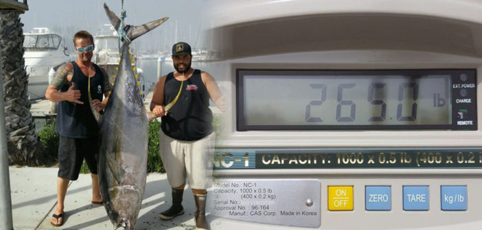 Record Yellowfin Tuna Caught Off Oceanside