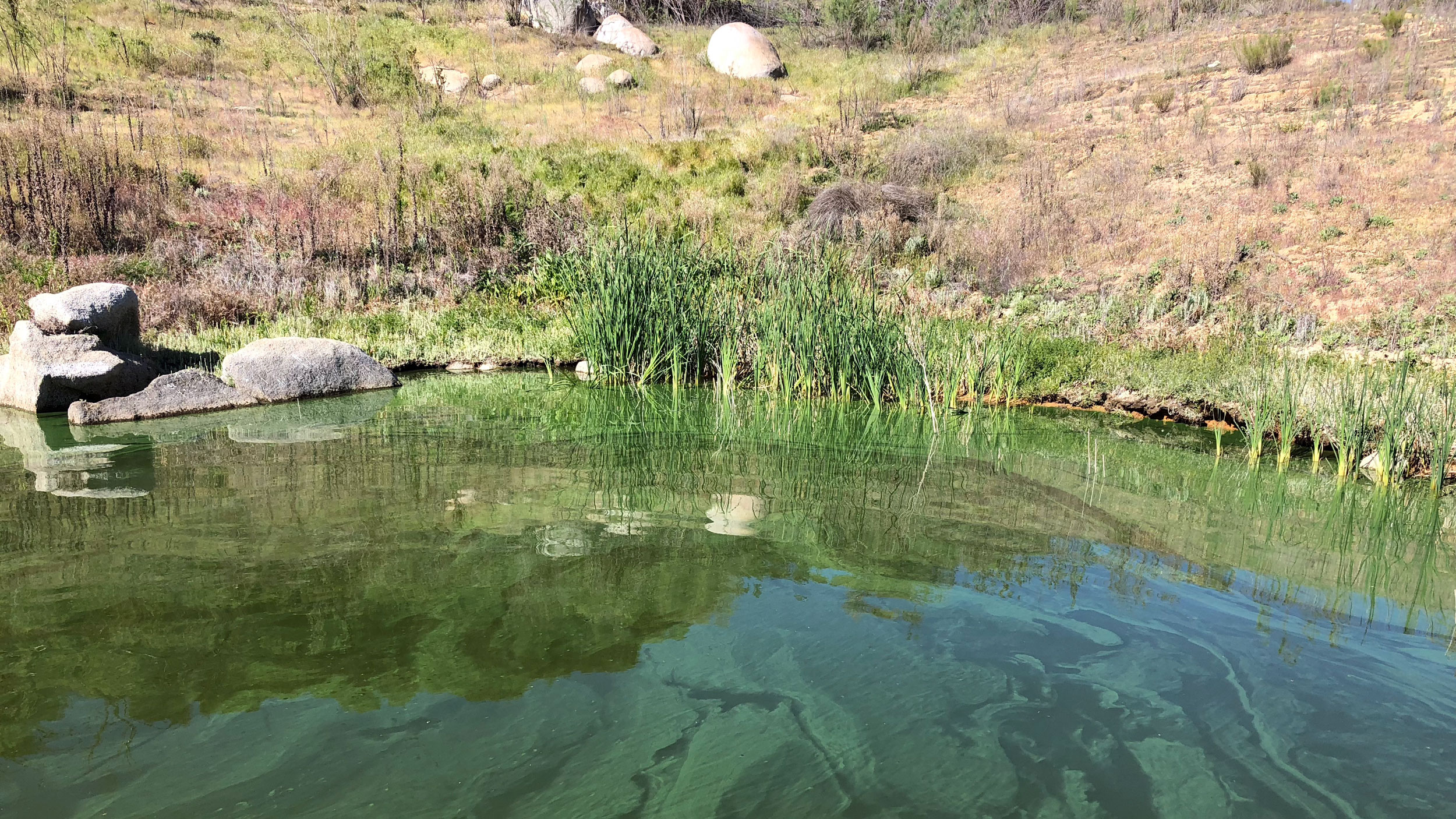 Photo of algae at Lake Barrett